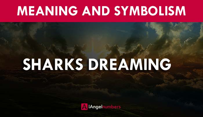 Dreams of Sharks Meaning and Symbolism, Facts (2020)